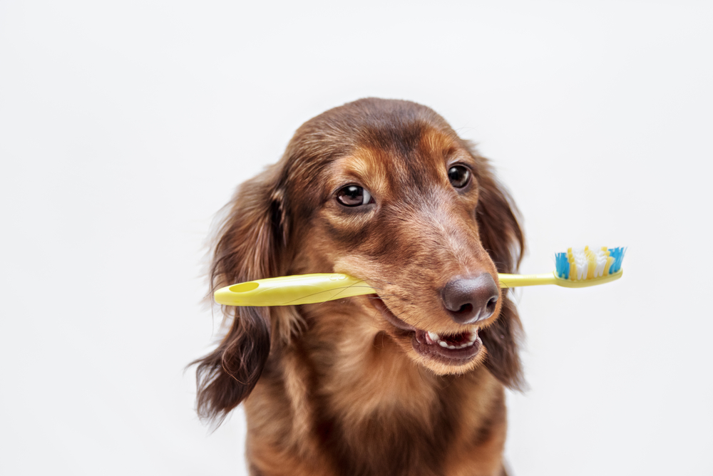 pet dental care from our veterinarian in oakland park