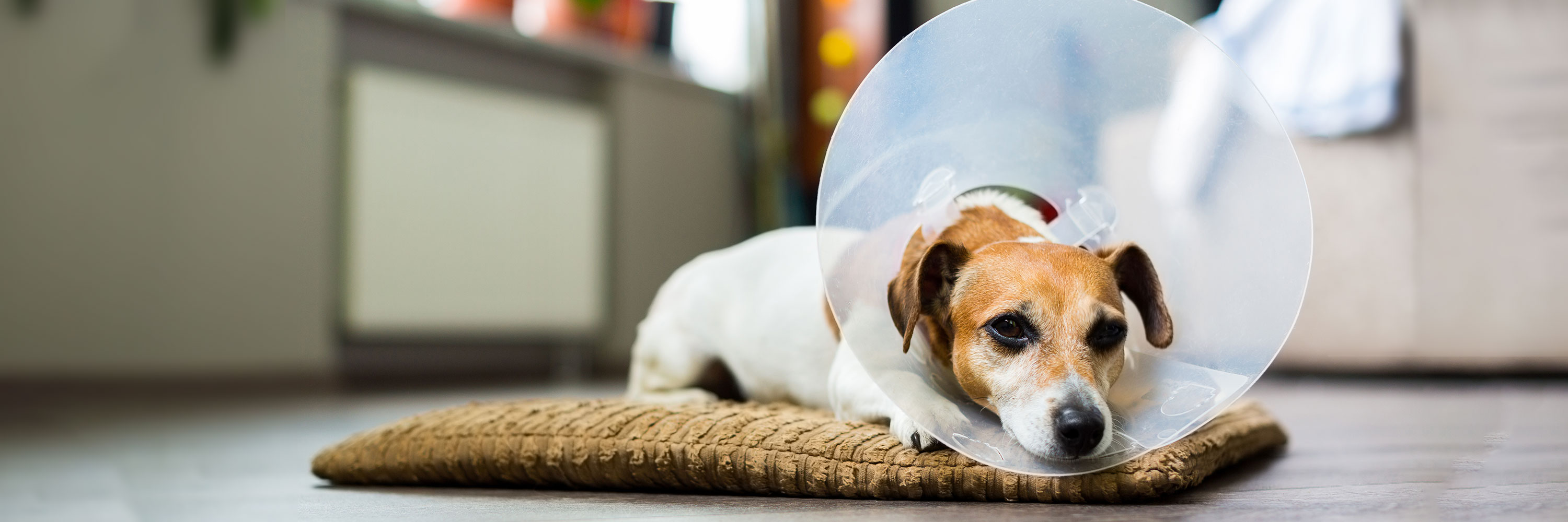 Vomiting and Diarrhea Can Quickly Turn Into a Veterinary Emergency