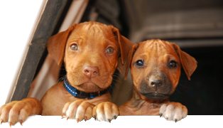 bigstock_Funny_Puppy_Faces_SMALL.png