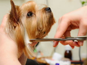 Oakland Park Dog Grooming