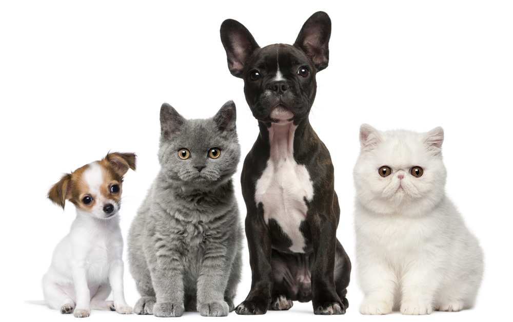 Oakland Park Animal Hospital Providing Care for Your New Puppy or Kitten